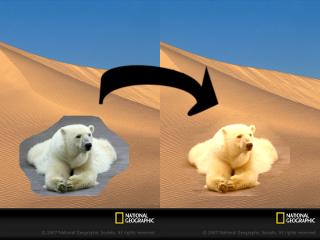 desert_bear_arrow