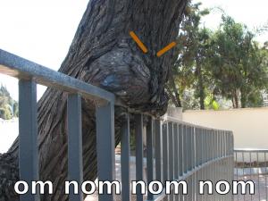 tree_nom